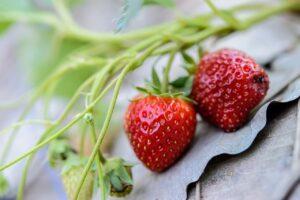 strawberries, fresh, strawberry